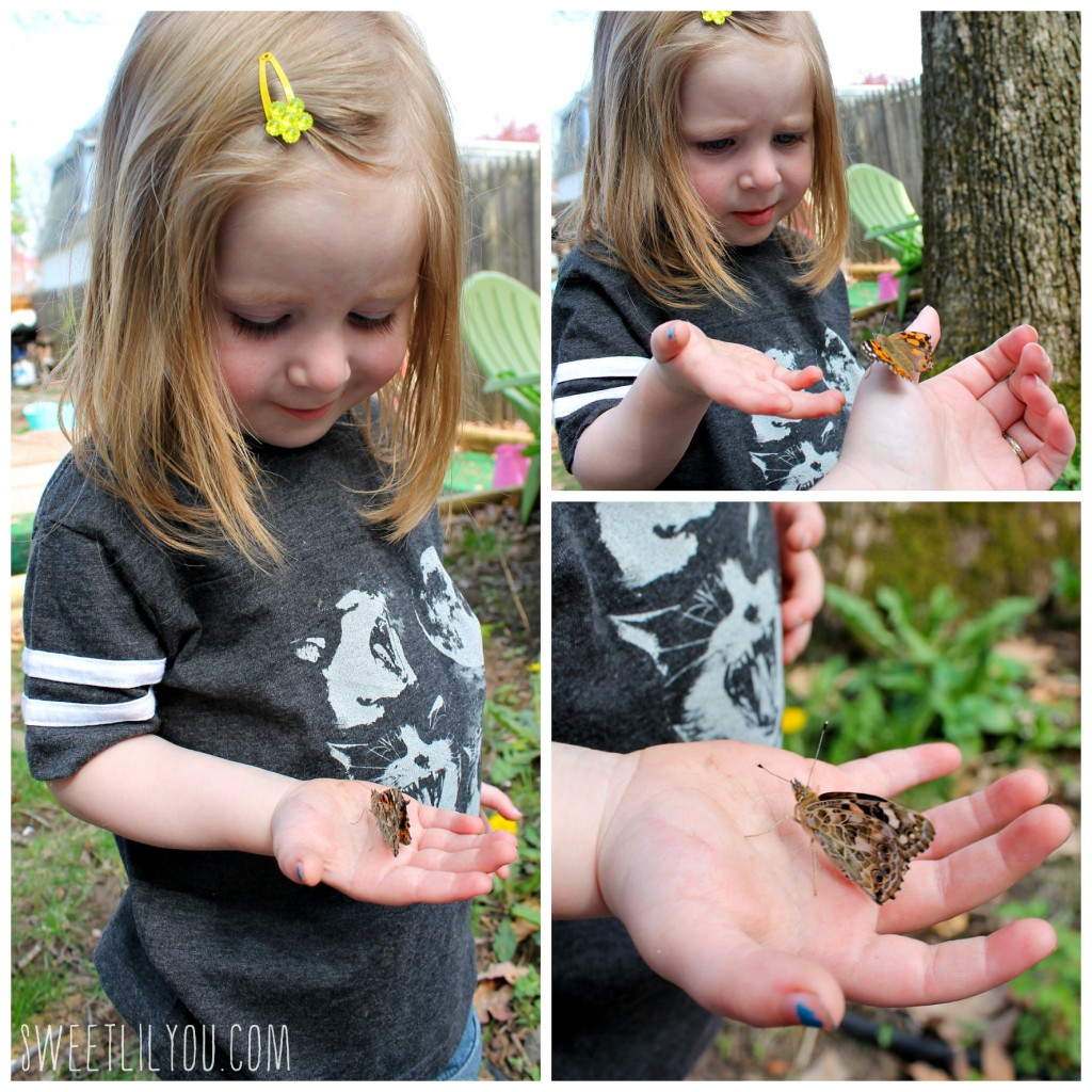 Avery holding a painted lady butterfly. Collage