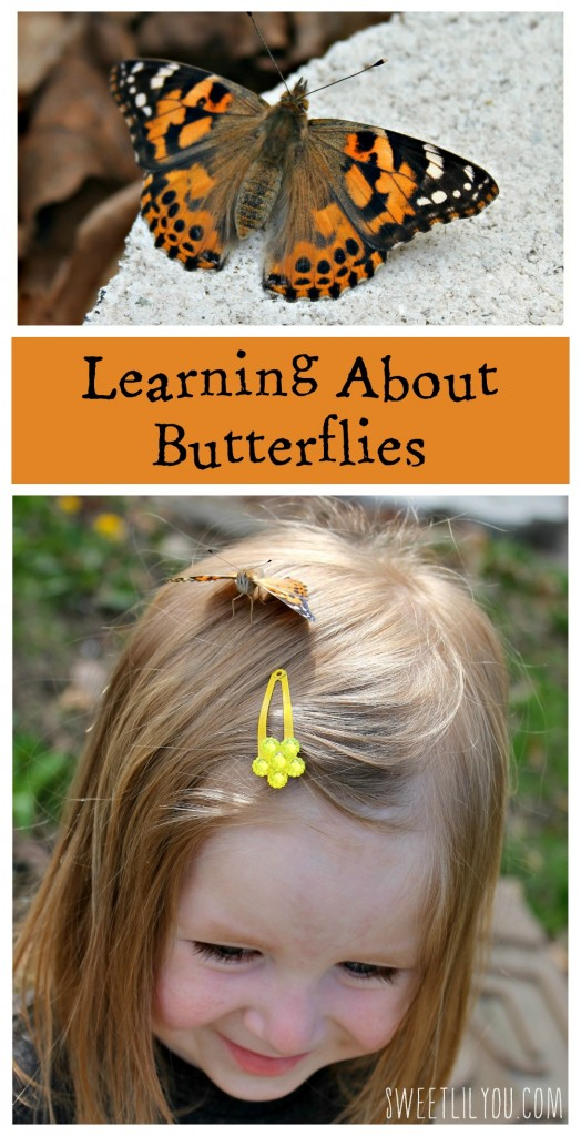 Learning About Butterflies