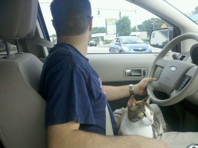 cat in a car
