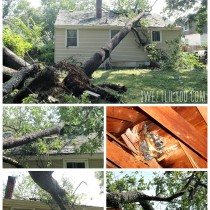 Rhode Island Tree on House from Storm
