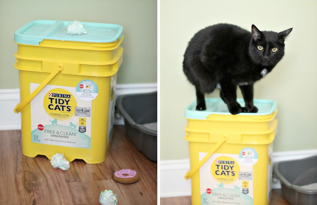 unscented cat litter